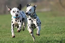 Ποιοι σκύλοι απαιτούν αυξημένη άσκηση;