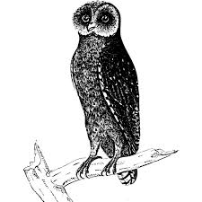 Image of <b>black owl</b> on a <b>tree</b> branch | Free SVG