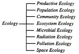 essay on ecologybranches of ecology