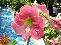 List Of <b>Flower</b> Names A To Z With Pictures. Common And Easy To ...
