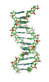 Noticias criminología.Los genes podrían tener que ver en el logro educativo . Marisol Collazos Soto