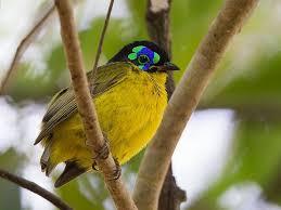 un ptit oiseau - ajonc - 30 mars trouvé par Martin Images?q=tbn:ANd9GcSHU8mlfw35hM2aKo_kNzEhWoVeJsrogiJaWgUq1tJaeeSCF_Fs-Q