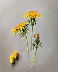 Люблю весну...натура прямо под ногами     . #<b>пастель</b> #цветы ...