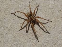 How to Get Rid of Wolf Spiders in the House | eHow