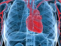 Soon <b>printing</b> a human heart on demand will <b>no longer</b> be sci-fi