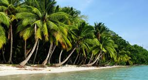 Image result for HAVELOCK ISLAND in andaman
