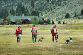 madison river montana a photo essay pheasant hunting photo shoot
