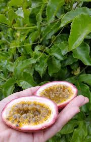 passion fruit inside marie viljoen jpg passion fruit inside marie viljoen