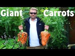 13inches jumbo carrot huge squishying