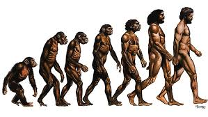 Image result for images of evolution