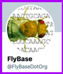 Dmelsmog - FlyBase Gene Report