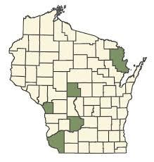 Draba nemorosa - Online Virtual Flora of Wisconsin