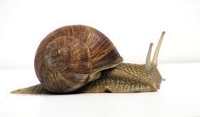 Land <b>snail</b> - Wikipedia