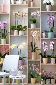 day orchid decor:  ideas about orchids on pinterest the orchid cattleya orchid and orchid flowers