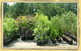 Image result for PLANT NURSERY PICS