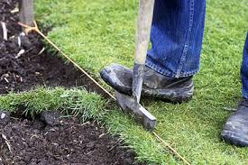 Lawns: <b>spring and summer</b> care / RHS Gardening