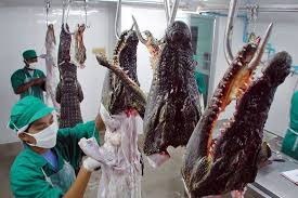 Resultado de imagem para to export crocodile meat to China