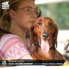fox movies premium home facebook image contain 1 person