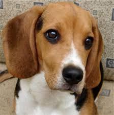 Risultati immagini per provocazioni dei cani