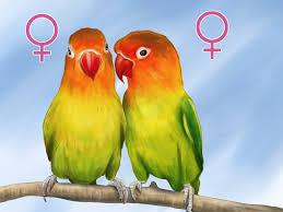 Love Birds Royalty Free Stock Image Image