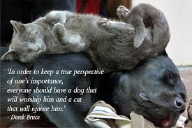 Quotes About Dogs And Cats. QuotesGram