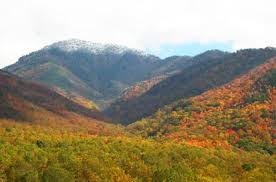Image result for pictures of great smoky mountains national park