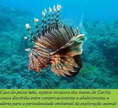 Resultado de imagem para IMAGENS DE RECEITAS DE VERMELHO CIOBA