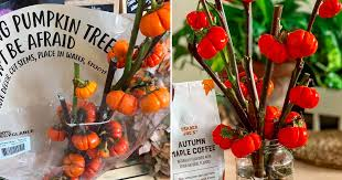 Trader Joe's Is Selling <b>Pumpkin Trees</b> For Just $8 | POPSUGAR Home