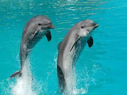 """Résultat de recherche d'images pour """"photos de dauphins"""""""