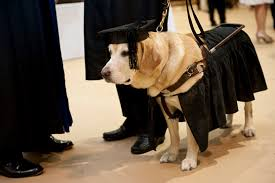 johns hopkins awards honorary master s degree to adorable service johns hopkins awards honorary master s degree to adorable service dog kirsch photos the huffington post