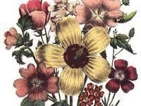 <b>Vintage Flower</b> Images