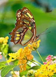 Image result for emerged butterfly