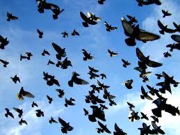 Resultado de imagen de palomas