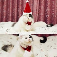Bolbove <b>Pet</b> Adjustable <b>Christmas Santa Hat</b> + Scarf for Small Dogs ...