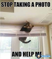 funny-fun-meme-cat-cats-pets-stuck-in-windows-blinds-amazing-pics ... via Relatably.com