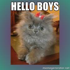 hello boys - cute cat | Meme Generator via Relatably.com