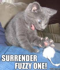 Surrender-Fuzzy-One.jpg via Relatably.com