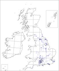 Orchis ustulata | Online Atlas of the British and Irish Flora