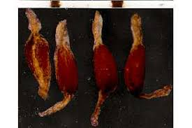 Plants Profile for Juncus triglumis (three-hulled rush)