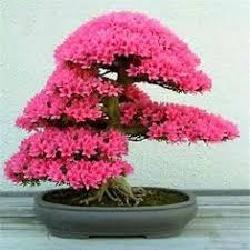 <b>Caioffer</b> Classic Hut Shape Garden Wooden <b>Flower Pots</b> Zakka ...