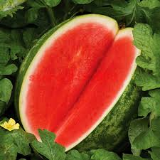 30pcs melon seeds seedless watermelon seeds fruit plant variety fresh cool summer bonsai plant for home buy fresh cool summer