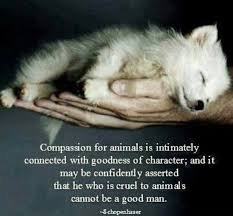 Compassion for animals is intimately associated with goodness of ... via Relatably.com