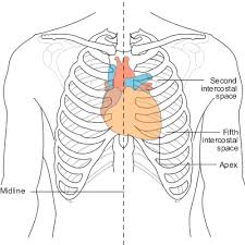 chest leads   ecg lead placement   normal function of the heart    diagram showing heart position in relation to the rib cage