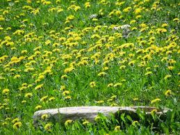Resultado de imagen de flores de mayo y junio