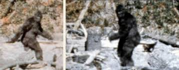 Image result for bigfoot