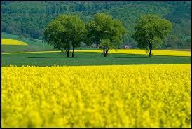 Resultado de imagem para COLEÇÃO ELLE verde e amarelo