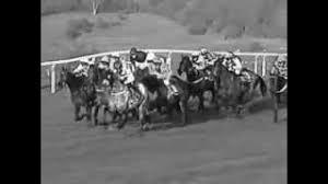 <b>Race</b> Horse <b>Death</b> Watch
