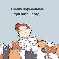 <b>Я была нормальной</b>, три кота назад.   Кошачьи цитаты, Я люблю ...