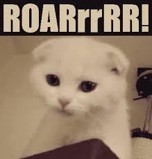 Image result for image of roaring kitten