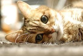 「猫 かわいい」の画像検索結果